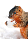 """Squirrel Eating Snow"" by Jim Irwin"
