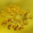 """Yellow"" by Bill Tomlinson"