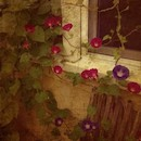 """Morning Glories"" by Martta Kelly"