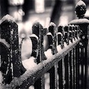 """Fence, Central Park"" by Gabrielle Rich"