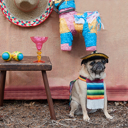 """Cinco de Mayo"" by Corey Phillips Fowler - Dogs, Dogs, Dogs! Photography 2017 Exhibition 1650 Gallery"