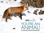 1650 Gallery You're an Animal Catalog