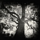 """The Melancholy of Trees III"" by Papalexandris"