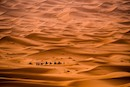 """Seas of Sand"" by Erin Walker-Anderson"